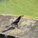 Bird, Costa Rica by Suzanna Lourie