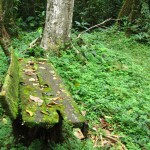 Bench in the Rainforest
