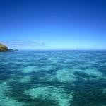 Reef Underwater, Fiji by Suzanna Lourie