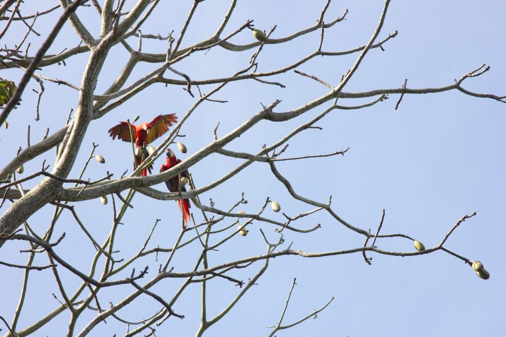 Magical Macaws